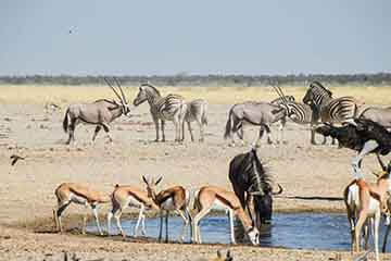 Private Guided Namibia Safari Tours