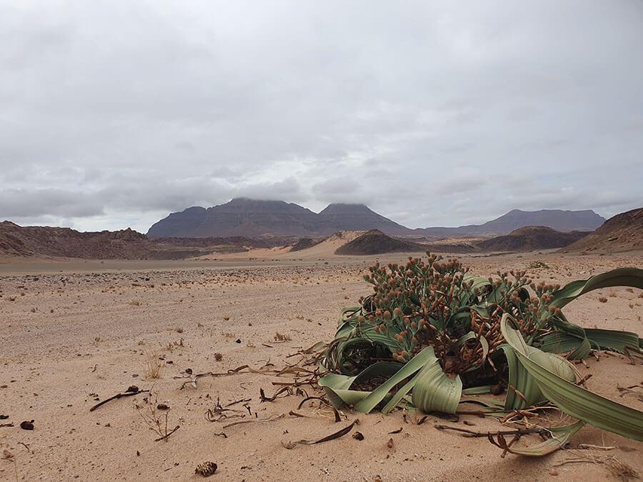 Namibia Small Group Tours